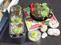 Schmunzelsteine und Sukkulenten